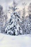 圣诞节多雪的结构树 免版税库存图片