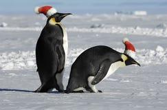 圣诞节夫妇企鹅 免版税库存照片