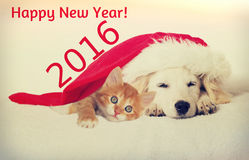 圣诞节小狗和小猫 免版税库存图片