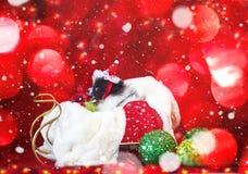 圣诞节小狗在圣诞老人帽子和在与落的雪的雪橇 库存照片