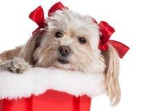 圣诞节小狗女孩 免版税库存图片