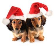 圣诞节小狗 免版税库存图片
