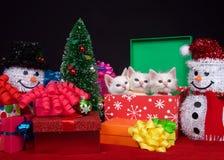 圣诞节小猫三重奏 库存图片