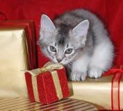 圣诞节小猫存在 免版税库存图片