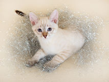 圣诞节小猫泰国闪亮金属片 免版税库存照片