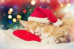 圣诞节小猫睡觉 免版税库存照片