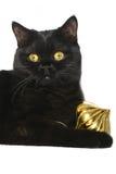 圣诞节小猫装饰品 免版税库存照片