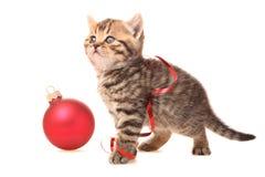 圣诞节小猫 免版税库存照片