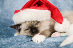 圣诞节小猫 免版税库存图片