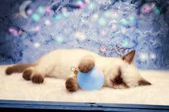 圣诞节小猫 库存照片