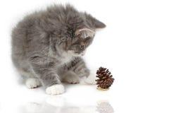 圣诞节小猫pinecone反射 库存照片