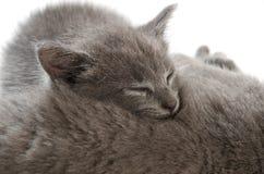 2圣诞节小猫pinecone反射 免版税图库摄影