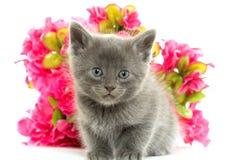 2圣诞节小猫pinecone反射 免版税库存照片