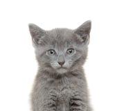 2圣诞节小猫pinecone反射 免版税库存图片