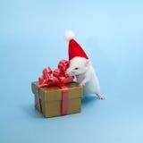 圣诞节小的鼠标 库存图片
