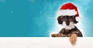 圣诞节帽子小狗圣诞老人 免版税库存图片