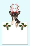 戴圣诞节帽子的逗人喜爱的奇瓦瓦狗狗拿着一白色pape 图库摄影