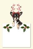 戴圣诞节帽子的逗人喜爱的奇瓦瓦狗狗拿着白皮书 免版税库存照片