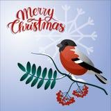 圣诞节快活的明信片 在一个分支的红腹灰雀与圣诞节装饰 库存照片