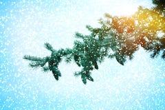 圣诞节我的投资组合结构树向量版本 新年好 库存照片