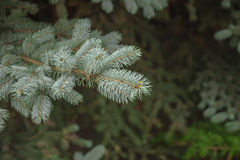圣诞节我的投资组合结构树向量版本 库存照片
