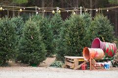 圣诞节批次结构树 库存图片