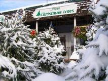 圣诞节批次结构树 免版税库存图片