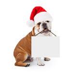 圣诞节拿着空白的标志的圣诞老人牛头犬 免版税库存照片