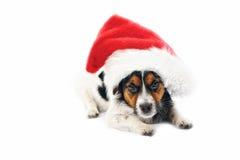 圣诞节插孔罗素 免版税库存图片