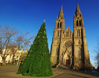 圣诞节教会结构树 库存图片