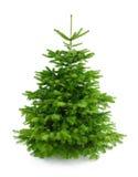 圣诞节新鲜的装饰品完善结构树 免版税库存图片