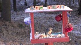 圣诞节新年装饰了鸟饲养者和五子雀 股票录像