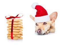 圣诞节曲奇饼和狗 免版税库存图片