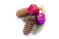 圣诞节杉木锥体 免版税图库摄影