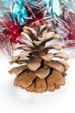圣诞节杉木锥体 库存图片