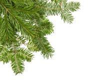 圣诞节杉木 免版税图库摄影