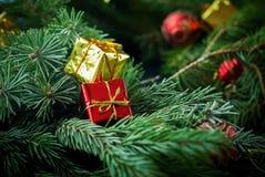 圣诞节构成红色金黄箱子杉树 免版税库存照片
