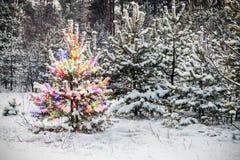 圣诞节林木冬天 库存照片