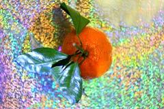圣诞节柑橘彩虹背景 库存照片