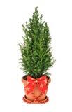 圣诞节查出结构树白色 没有阴影 免版税库存照片