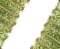 圣诞节框架绿色做结构树白色 库存照片
