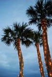 圣诞节棕榈树 免版税库存照片