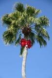 圣诞节棕榈树 库存照片