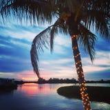 圣诞节棕榈 免版税图库摄影