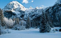 圣诞节森林在一冷的12月天 图库摄影