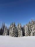 圣诞节森林 库存照片