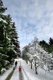 圣诞节森林 库存图片