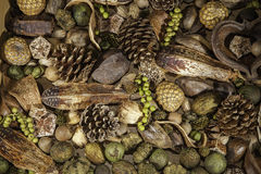 圣诞节植物的杂烩背景 库存图片