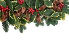 圣诞节植物群 库存图片