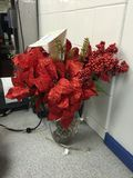 圣诞节植物 免版税图库摄影